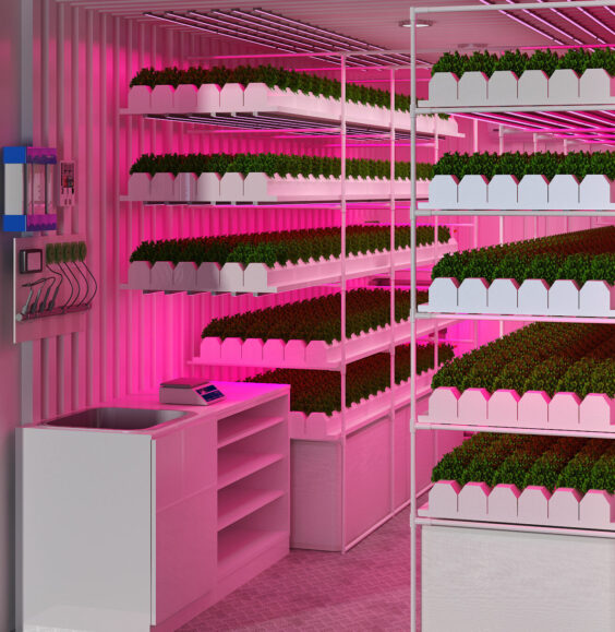 Hydroponic container, hydroponic plants