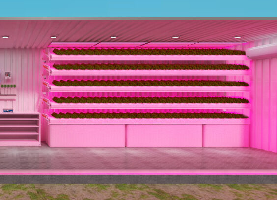 Inside view of shipping container farm