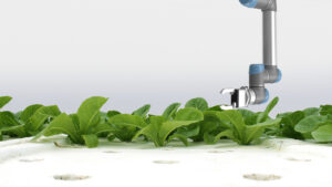 autonomous farming, hydroponics