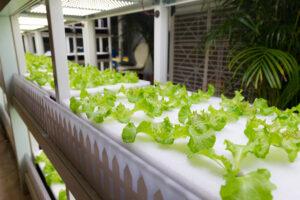 hydroponics, indoor farming